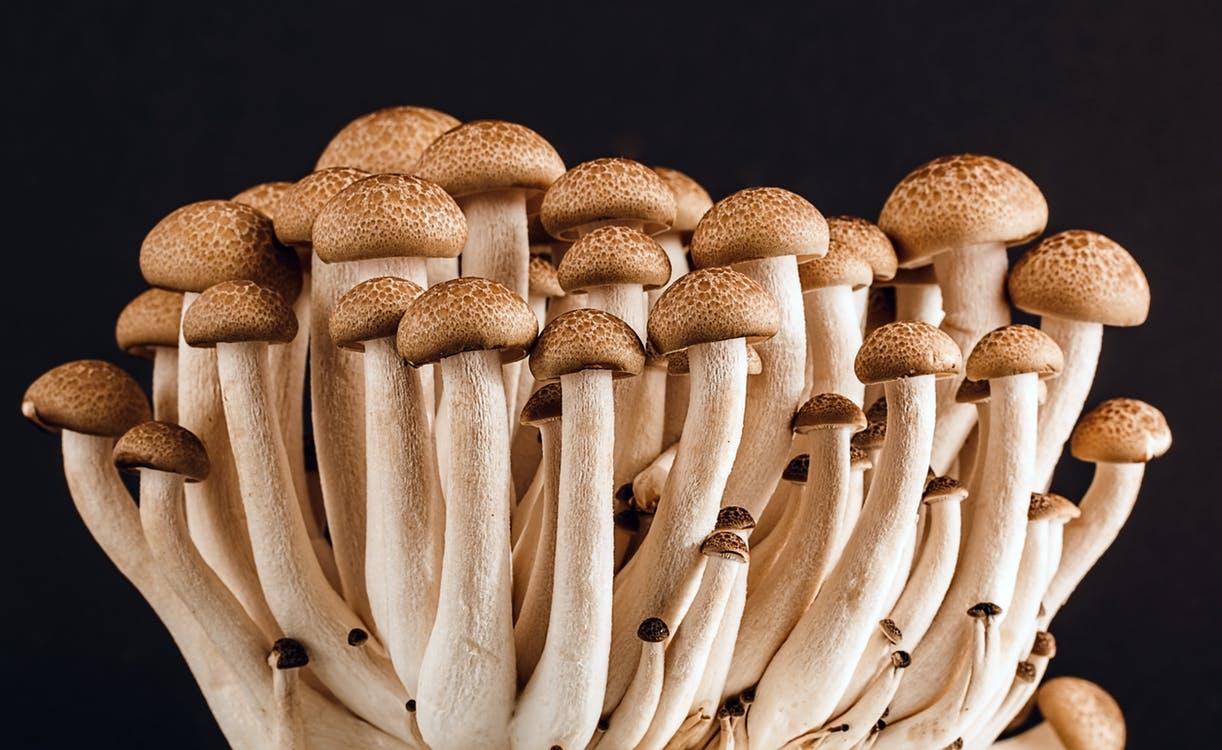 formes de pénis en champignon
