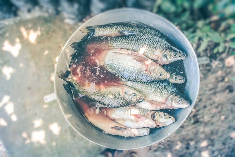 sardines bonnes graisses
