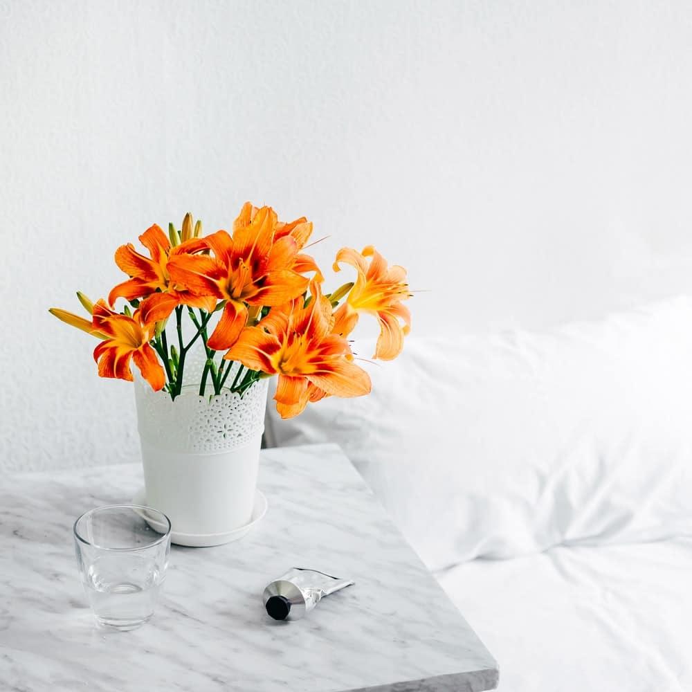 Amaryllis fleurs vase lit crème mains déco
