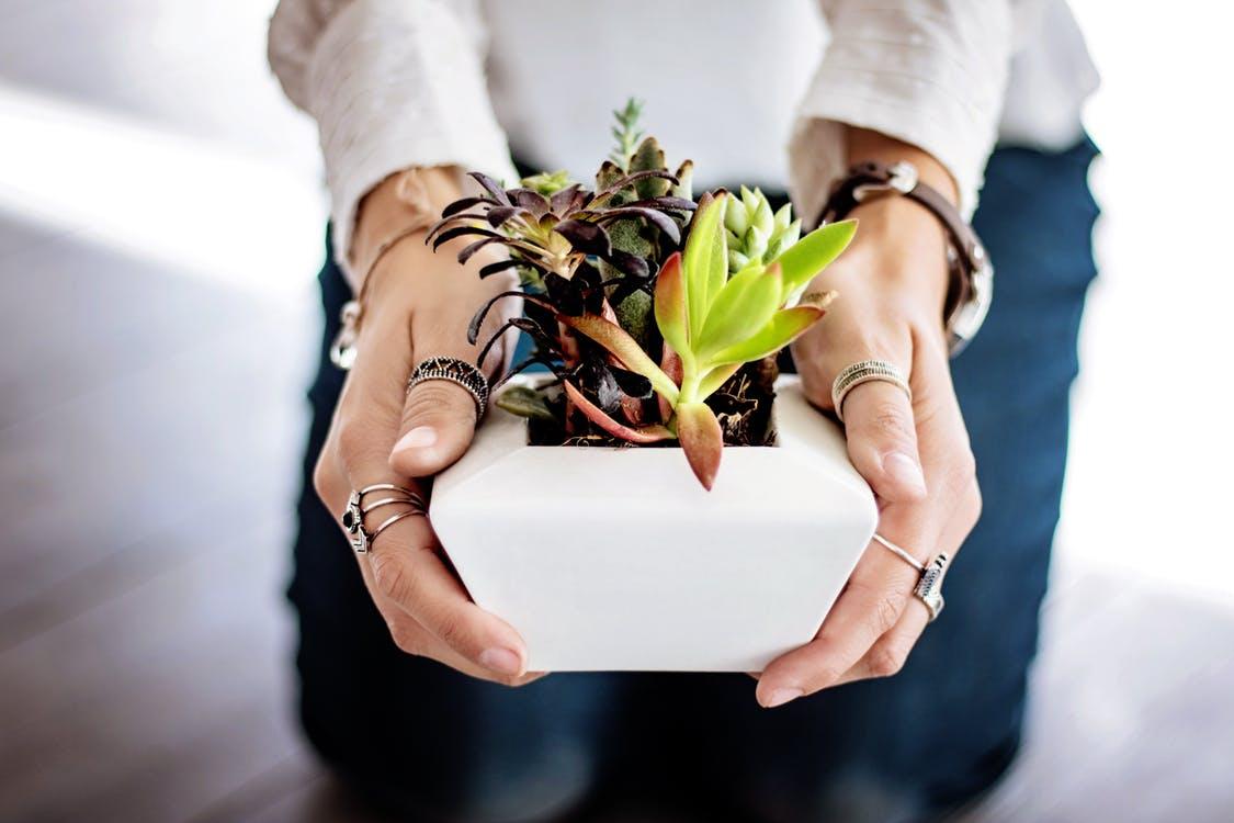 jardin plantes d'intérieur