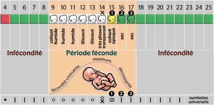 bébé méthode contraceptive naturelle