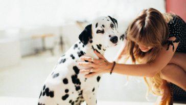 santé canins