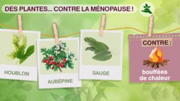 thé tisane et infusion contre la ménopause
