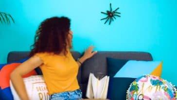peur des araignées