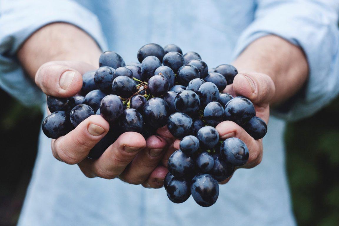 grappe de raisin aliments belle peau