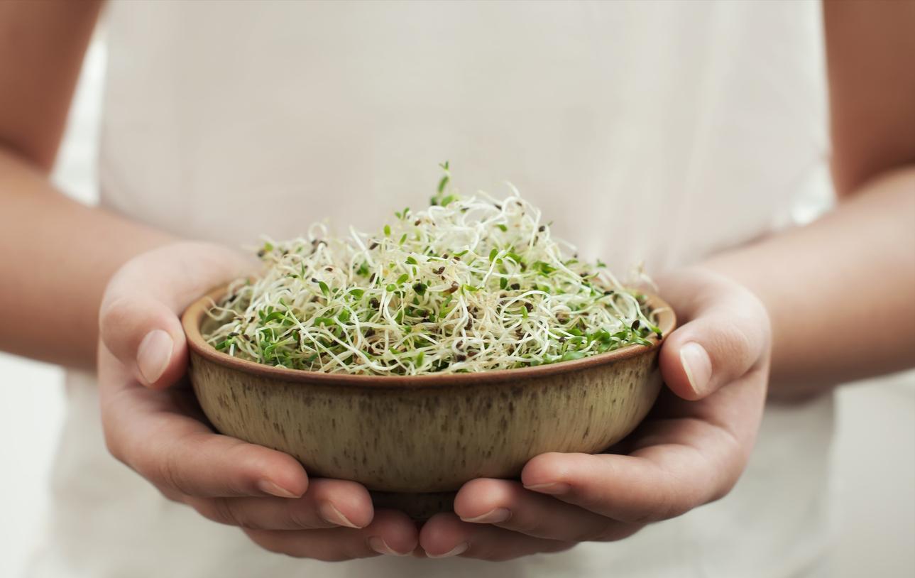bol salade femme graines germées à germer