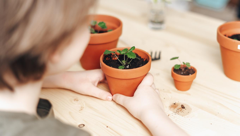 potager intérieur planter plantes pots enfants