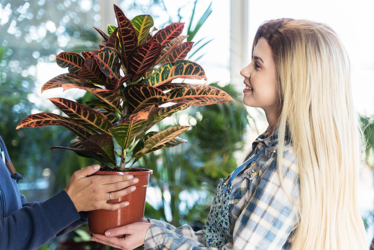 cadeau fête des mères plante verte offrir femme