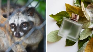 parfum naturel non testé sur les animaux