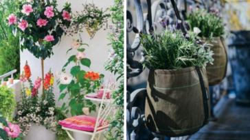 balcon plantes fleuries déco idées inspiration fleurs